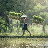 Malaysia's Lagging Agriculture Sector
