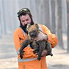 Incendiary Extinctions: Australian Fires and the Species Effect